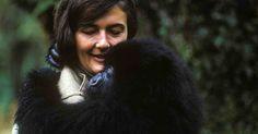 Epic Dian Fossey Miniseries