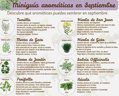 Miniguías de siembra para huerto urbano #septiembre #aromaticas