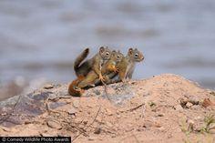 [뉴스pick] '순간 포착'…세계에서 제일 귀여운 동물 사진 다 모였다! : 네이버 뉴스