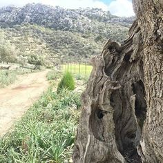 420 years old (aprox). It has seen the history of Mallorca.   We create links between people and destinations. A part of you in Mallorca, a part of Mallorca with you. (Learn more +34 672 783 850)