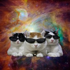 cool space cats