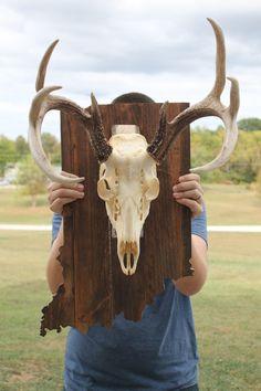 Items similar to State Shaped Skull Mount, Wooden Skull Mount on Etsy Deer Skull Decor, Deer Hunting Decor, Deer Head Decor, Deer Skulls, Deer Antlers, Deer Mount Decor, Antler Mount, Deer Antler Crafts, Antler Art