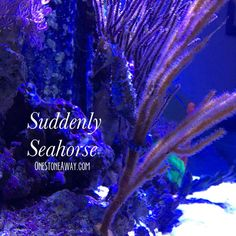 Suddenly Seahorse – One Stone Away…
