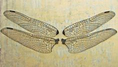 dragonfly wing | Dragonfly wings