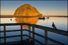 Sittin' on the dock of the bay; pigeon watching the sunrise light on Morro Rock from pier, Morro Bay, California