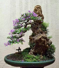 Flowering Bonsai Tree, Bonsai Tree Types, Indoor Bonsai Tree, Bonsai Trees, Mini Bonsai, Bonsai Soil, Bonsai Garden, Ikebana, Bonsai Forest