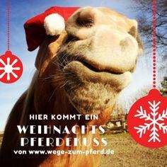 Ein Weihnachtspferdekuss!