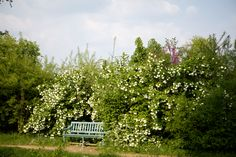 A bank of white hydrangeas overtakes a garden bench in Marie-Antoinette's private estate at Versailles.