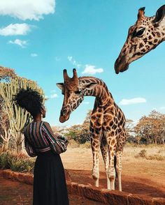 Discount Airfares Through The USA To Germany - Cost-effective Travel World Wide Fotos Com Animais, Girafas, Natureza, Safari Safari, Kenia Hotel, Adventure Awaits, Adventure Travel, Diani Beach Kenya, Travel Aesthetic, Travel Goals, Travel Tips, Travel Photos
