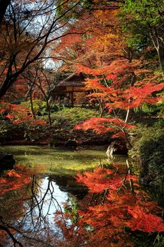 Beautiful Nature Pictures, Nature Photos, Beautiful Landscapes, Beautiful Gardens, Beautiful Gifts, Japan Garden, Autumn Scenes, All Nature, Fall Pictures