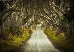 Dark Hedges of Armoy - Northern Ireland (Or King's Road if you watch GoT. ;)
