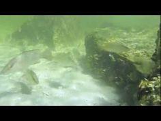 Snorkeling Tampa Bay - http://www.florida-scubadiving.com/florida-scuba-diving/snorkeling-tampa-bay/