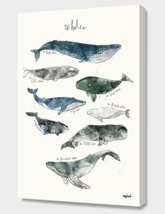 """""""Whales"""", Numbered Edition Canvas Print by Amy Hamilton - From $69.00 - Curioos"""