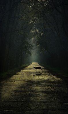 still, my deer | by Nola Nate