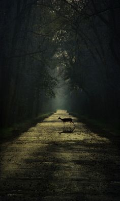 It's either a heavenly spotlight, or UFO beaming up the deer! kn