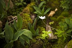 Moss Acres - Gardening with moss and growing moss