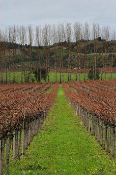 ✯ Anderson Valley Vineyard - near Mendocino, CA