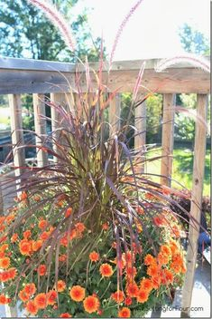 Copper mums and Purple Fountain Grass Fall Container Gardening Idea ! From Setting For Four
