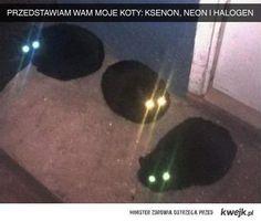 Przedstawiam moje koty...