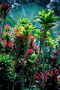 Hawaiian tropical gardens containing exotic plants