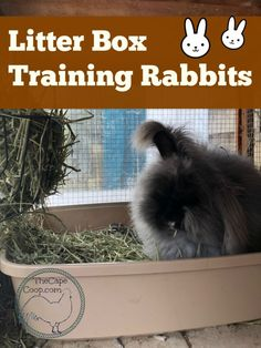 Litter Box Training Rabbits - The Cape Coop Pet Bunny Rabbits, Meat Rabbits, Raising Rabbits, Caring For Rabbits, Lionhead Bunnies, All About Rabbits, Litter Box Training Rabbits, Rabbit Litter Box, Bunny Cages