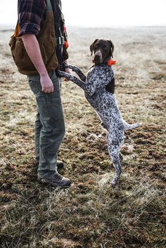 GSP German Shorthaired Pointer doing what he loves the most, on a hunt with his people. Gsp Puppies, Pointer Puppies, Pointer Dog, Dog Whisperer, German Shorthaired Pointer, Hunting Dogs, Family Dogs, Mans Best Friend, Best Dogs