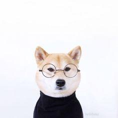 Doge Jobs :D