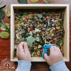 Forest School Activities, Nature Activities, Montessori Activities, Autumn Activities, Toddler Activities, Outdoor Preschool Activities, Toddler Fun, Toddler Learning, Preschool Learning