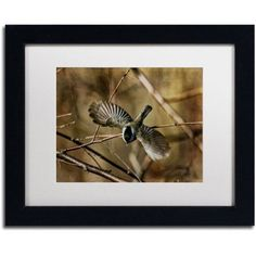 Trademark Fine Art Dive Bomber Canvas Art by Lois Bryan, White Mat, Black Frame, Size: 11 x 14