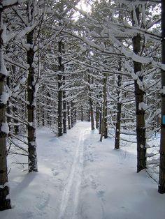 Kolapore Ski Trail Through the Pines by Bobcatnorth, via Flickr