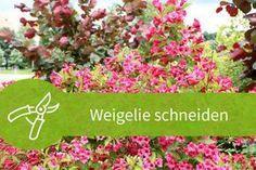 Die 412 Besten Bilder Von Baume Und Straucher In 2019 Plants