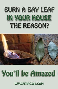 Burn A Bay Leaf In Your House. The Reason? You'll Be Amazed!Burning a bay leaf is highly useful for relaxing your muscles, soothing your mind and improving your mood. Natural Home Remedies, Herbal Remedies, Health Remedies, Headache Remedies, Cough Remedies, Health And Beauty, Health And Wellness, Health Fitness, Wellness Tips