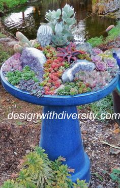 Planting Designs And Coaching Home Gardeners Bird Baths ~ Not Just For Birds