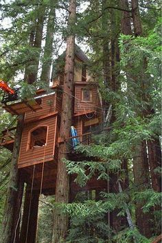 We could see ourselves swinging around the branches and snacking on some nuts in this home in the sky!