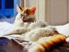 weather forcast calls for snow! Weather, Snow, Cats, Animals, Beautiful, Gatos, Animales, Kitty Cats, Animaux