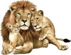 Jungle, Zoo, Safari Animals Wall Decals - Large Life-Like Lion with Cubs Wall Stickers - Self-Adhesive, Removable Wall Stickers for Nursery, Bedroom or Playroom