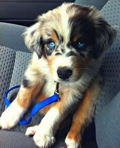 Adorable Dog Cross-Breeds