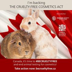 Take action to end cosmetics testing on animals in Canada! #BeCrueltyFree