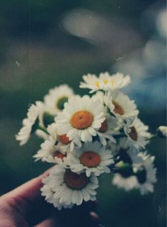 flowers, daisy, and vintage image Hand Flowers, Flowers Nature, Dried Flowers, Vintage Photography, Love Photography, Bohemian Photography, Colorful Flowers, Beautiful Flowers, Simple Flowers