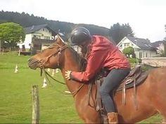 Queenie-Serie: Kraulstunde Horses, Animals, World, Guys, Animales, Animaux, Animais, Horse, Words