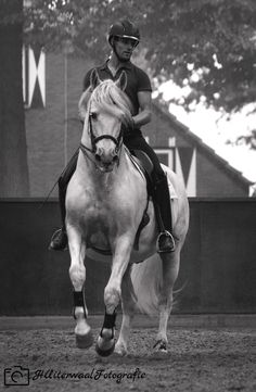 Pirouette by Bas de Recht and pré stallion Lebrero. Picture made by HUiterwaalFotografie