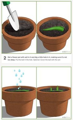 How to propagate an aloe plant using just an aloe leaf