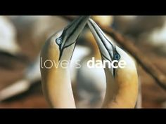 ▶ QuébecOriginal - Dance - YouTube