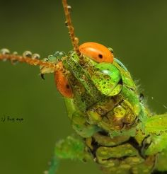 Fotografia hi ! what your name ? de bug eye :) na 500px