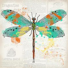 I uploaded new artwork to plout-gallery.artistwebsites.com! - 'Dragonfly On Newsprint-jp3451' - http://plout-gallery.artistwebsites.com/featured/dragonfly-on-newsprint-jp3451-jean-plout.html