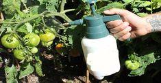 Jedlá sóda sa dá využiť nielen v kuchyni! 10 geniálnych trikov ako ju využiť na Vašej záhradke! - Přírodní léky Organic Gardening, Gardening Tips, Vegetable Gardening, Growing Gardens, Garden Pests, Garden Fertilizers, Grow Your Own Food, Companion Planting, Edible Garden