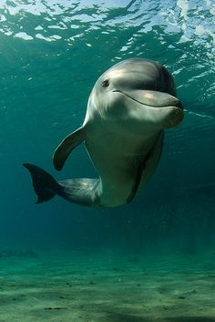 Dolphins seem to have a permanent smile. I think God made them that way on porpoise, as they are caring/nurturing creatures ❤