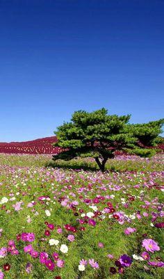 Amazing Gardens, Beautiful Gardens, Beautiful Flowers, Tree Photography, Landscape Photography, Spring Photography, Beautiful World, Beautiful Places, Nature Wallpaper