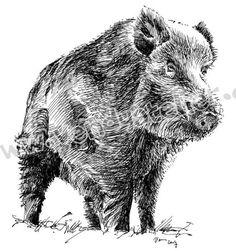 Risultati immagini per wild boar drawing Wild Boar Hunting, Pig Hunting, Chien Springer, Bugs Bunny Drawing, Hunting Tattoos, Animal Games, Wildlife Art, Animal Tattoos, Pyrography