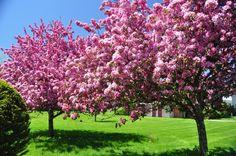 Amazing Spring Scenes | Travel Klix